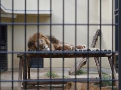 京都市動物園 - 関西おでかけナビ