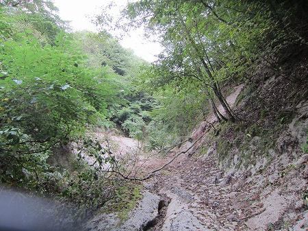 林道越路線 2