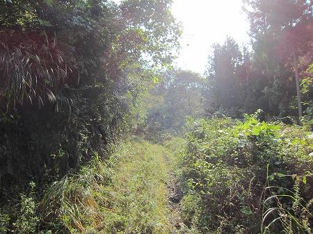 林道道志口線 2
