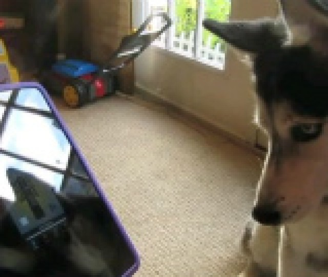 E B  E  Bb Ef Bc Ahusky Dog Sings With Ipad Better Than Bieber Now On Itunes  E   E B Bb E Ba Ba E  C E C  E  A E  A E   E  Bipad E  Ab E