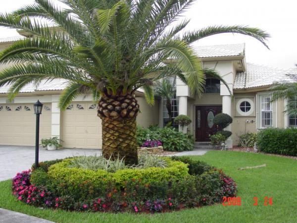 palm tree landscaping ideas home