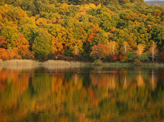 蓼科湖2012秋 その2 - 蓼 ―たてしな― 科 の 風 光
