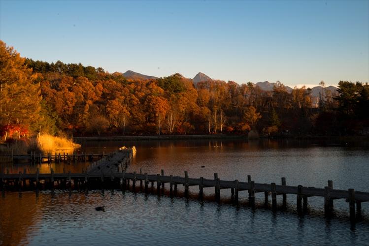 夕日に紅葉 蓼科湖 - 蓼 ―たてしな― 科 の 風 光
