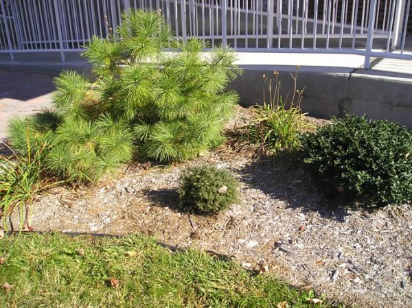 wood chips landscaping increase