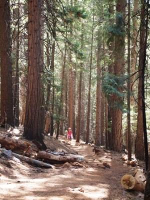 Trail PA125571