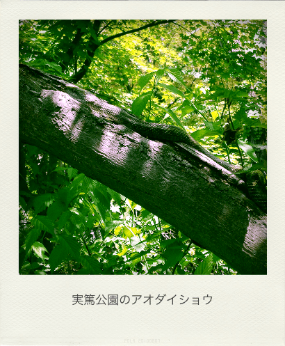 Snake of Saneatsupark