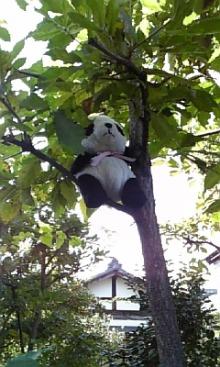 $「あるがままに生きる」-木登りぱんだ