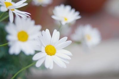 $「あるがままに生きる」-花