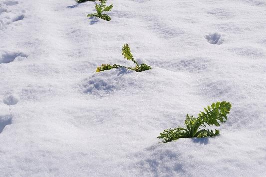 雪散歩 15