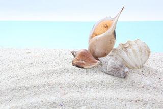 ビーチ貝殻