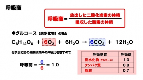 呼吸商(respiratory quotient; RQ)で脂肪の消費を把握する - 浜村拓夫の世界