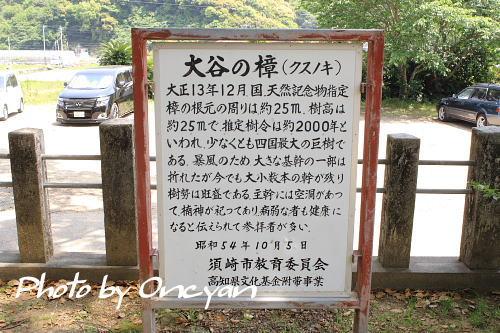 須賀神社 - 境内にある 「大谷の樟」は国・天然記念物 - 南国土佐へ来てみいや
