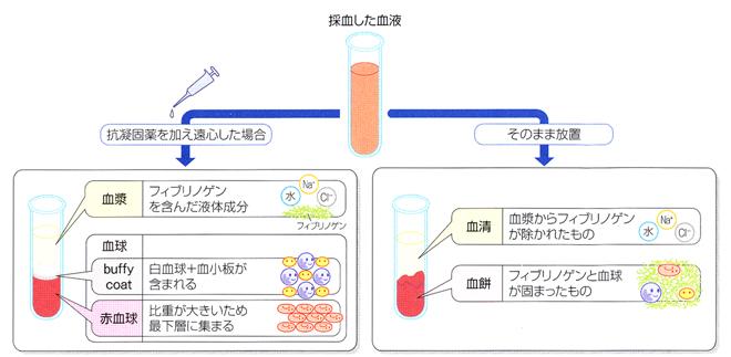 生化學実習-核酸- 予習 - MoE雑記帳