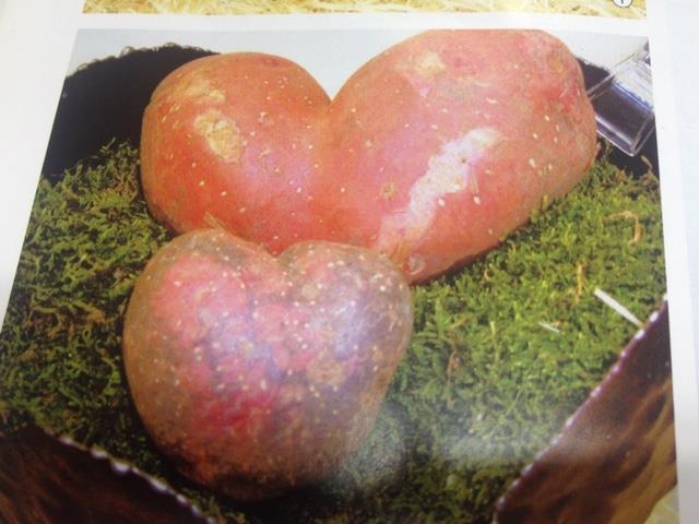 赤ジャガイモ