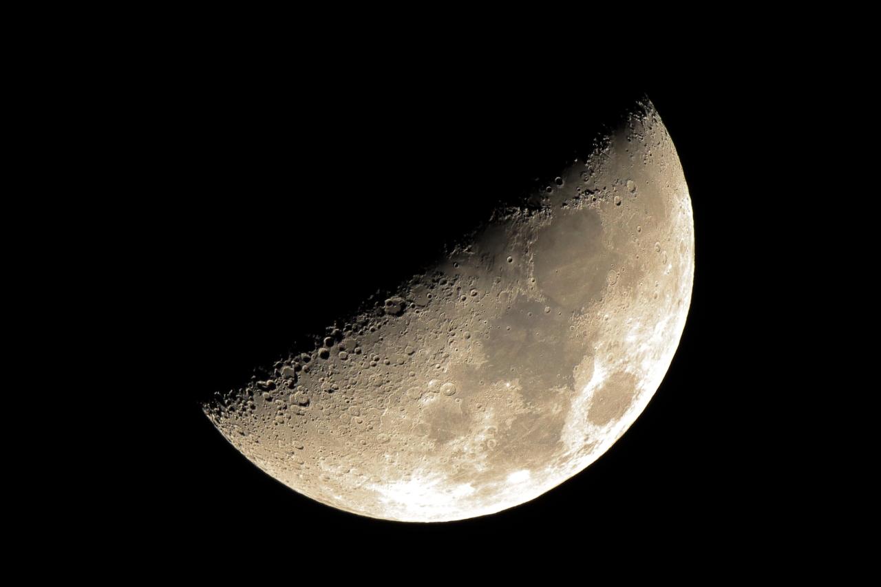 時々,鳥を見に 月面X