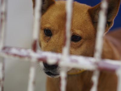 宮崎犬管理所-16-03-29-019
