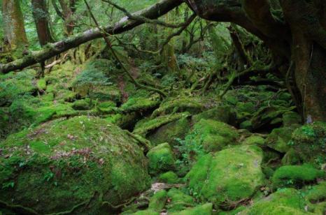 「屋久島 夏」の画像検索結果