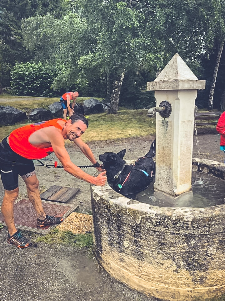 canicross : rafraichir son chien