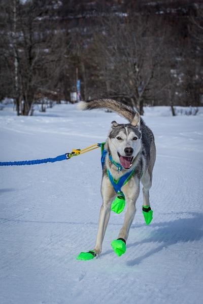 bottine pour chien snowmax