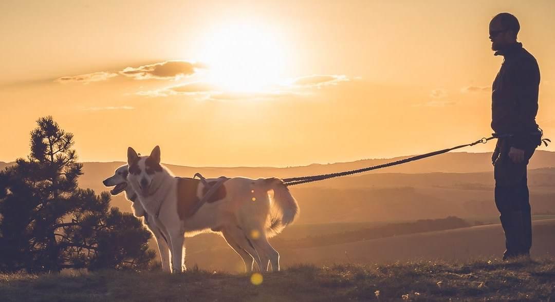 Qu'est-ce que la cani rando et quel matériel utiliser ?