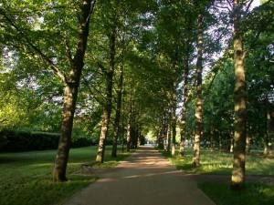 Allee (5)