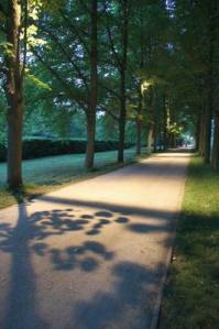 Allee_2979 (3)