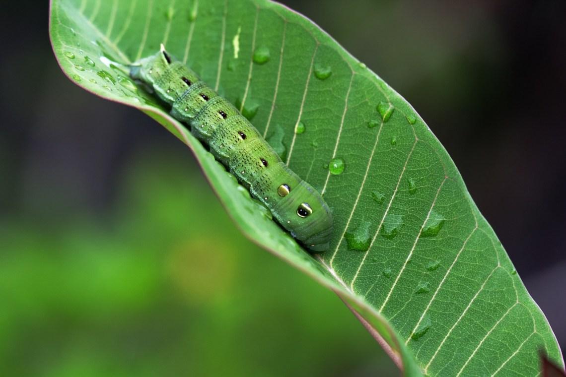 caterpillar-1166086_1280