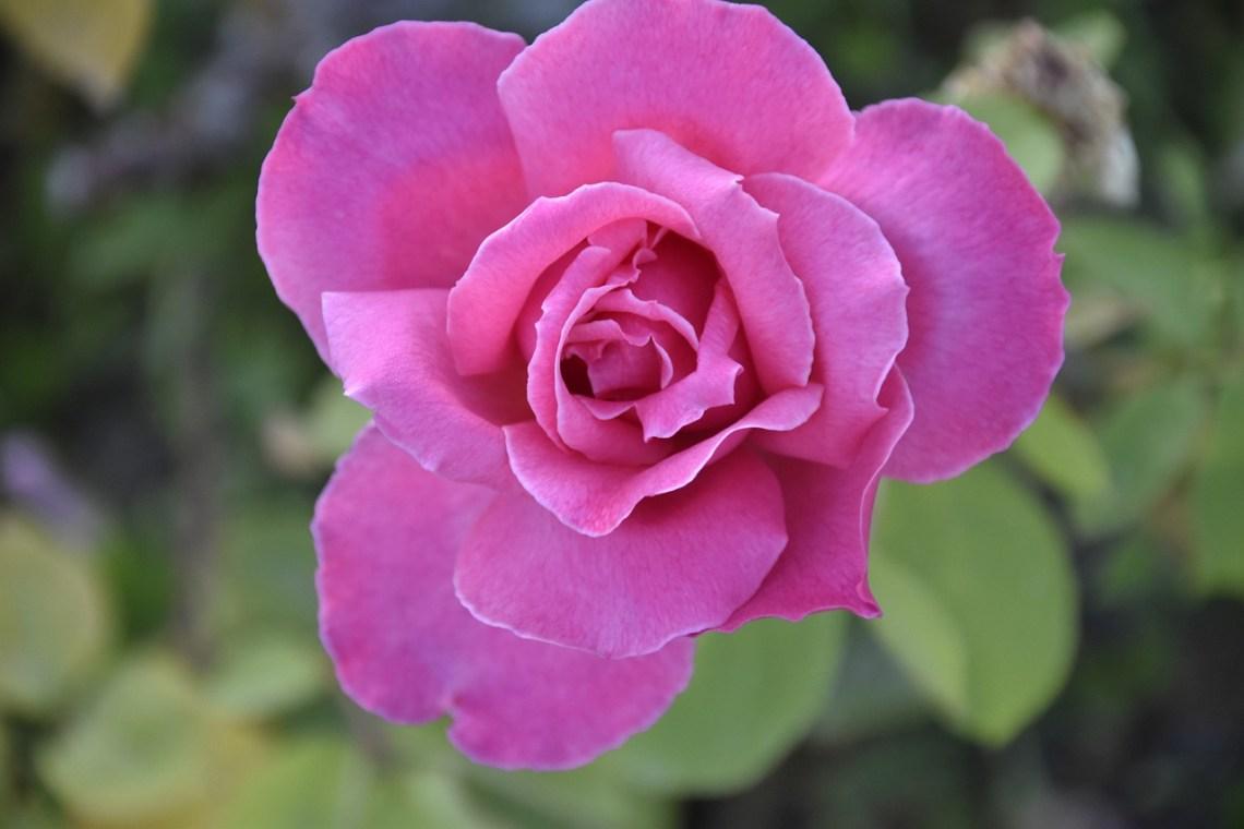 flower-4335981_1280