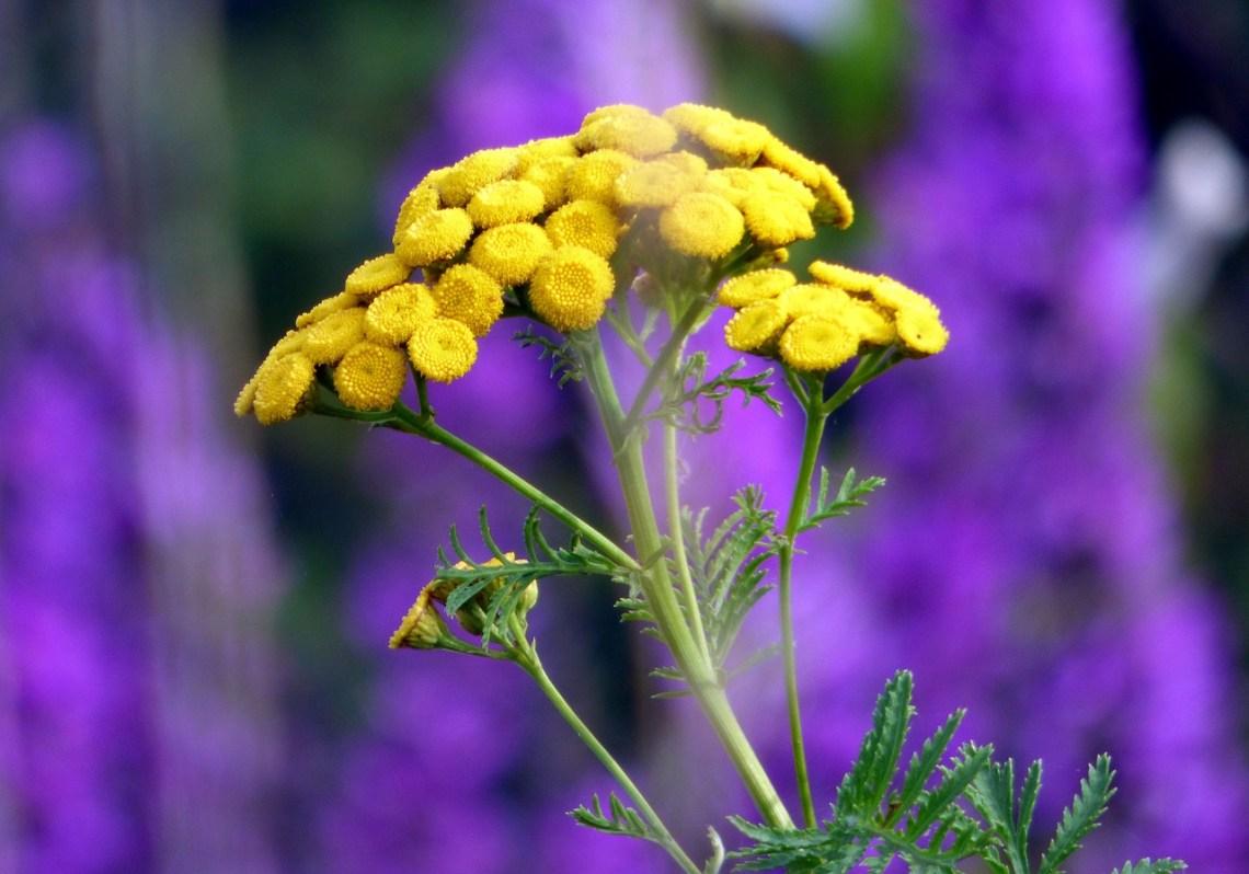flowers-3529298_1280