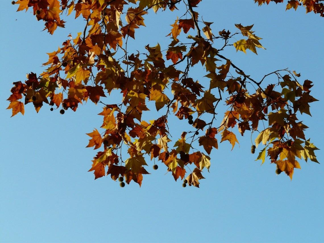 leaves-10708_1280