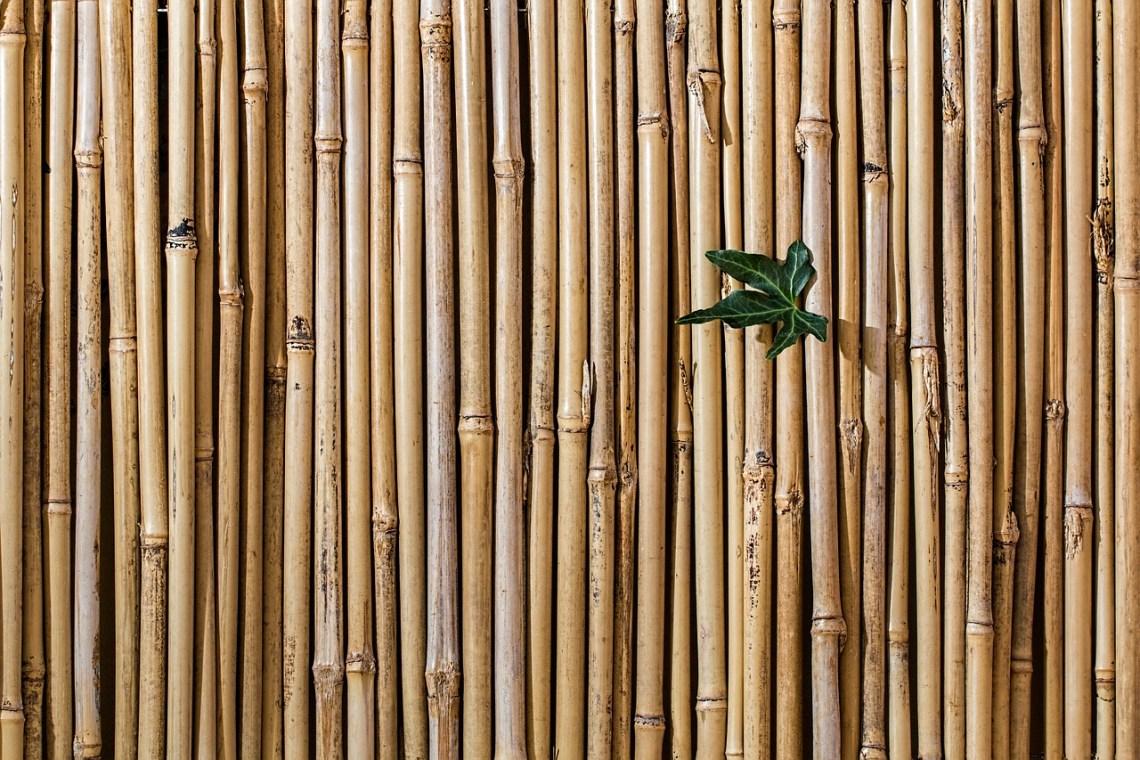 bamboo-2429954_1280