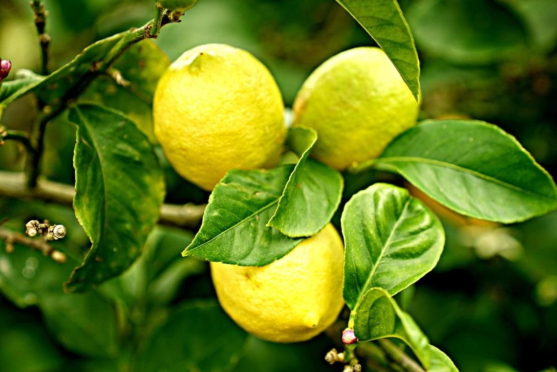 lemons-2825835_1280