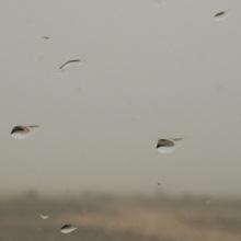 Regen in der Wüste Marokkos