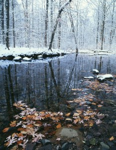 Rahway River Headwaters, South Mountain Reservation, Essex Count