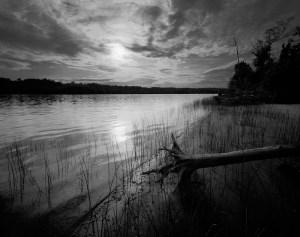 Driftwood, Reeds, Sunset, Hudson River, 2009, Teich