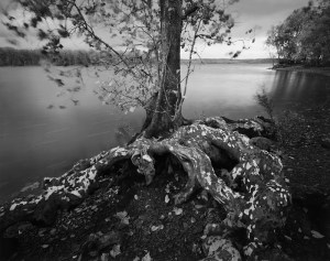 Sycamore and Thunderstorm, Four Mile Point, Hudson River 2010, Teich