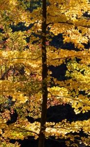 dean tree