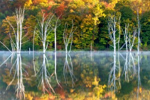 monk trees-1blog