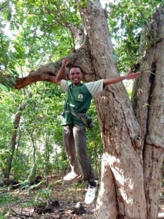 Taman nasional Bali barat : des lianes résistantes.