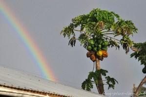 Arc-en-ciel et papayes.