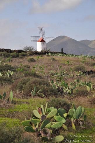 Moulin à Guatiza, à Lanzarote (Canaries).