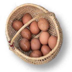 Panier en osier rempli oeufs de poules frais