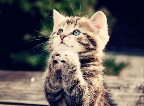 Cat-begging-your-image
