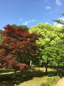 後楽園内での紅葉の写真