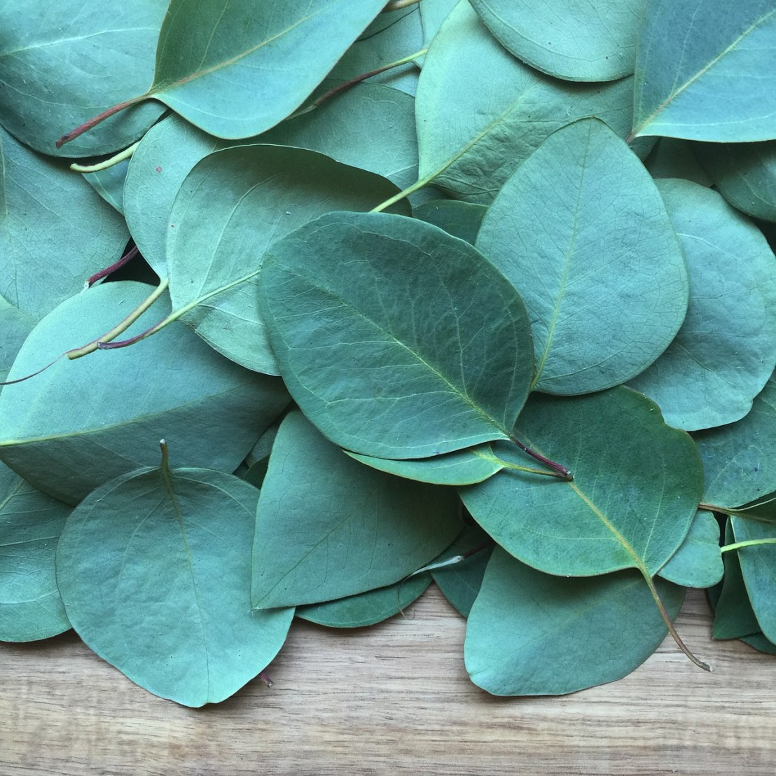 eucalyptus-2086785_1280(1)