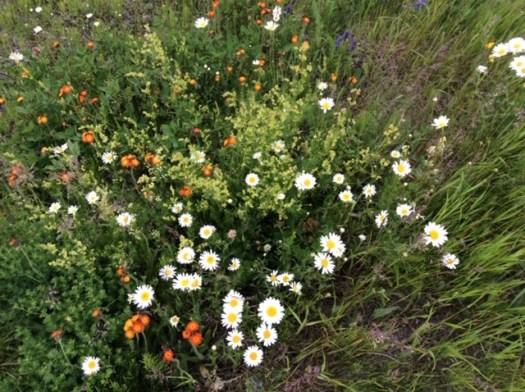 photo Marie G fleurs sauvages en Abitibi
