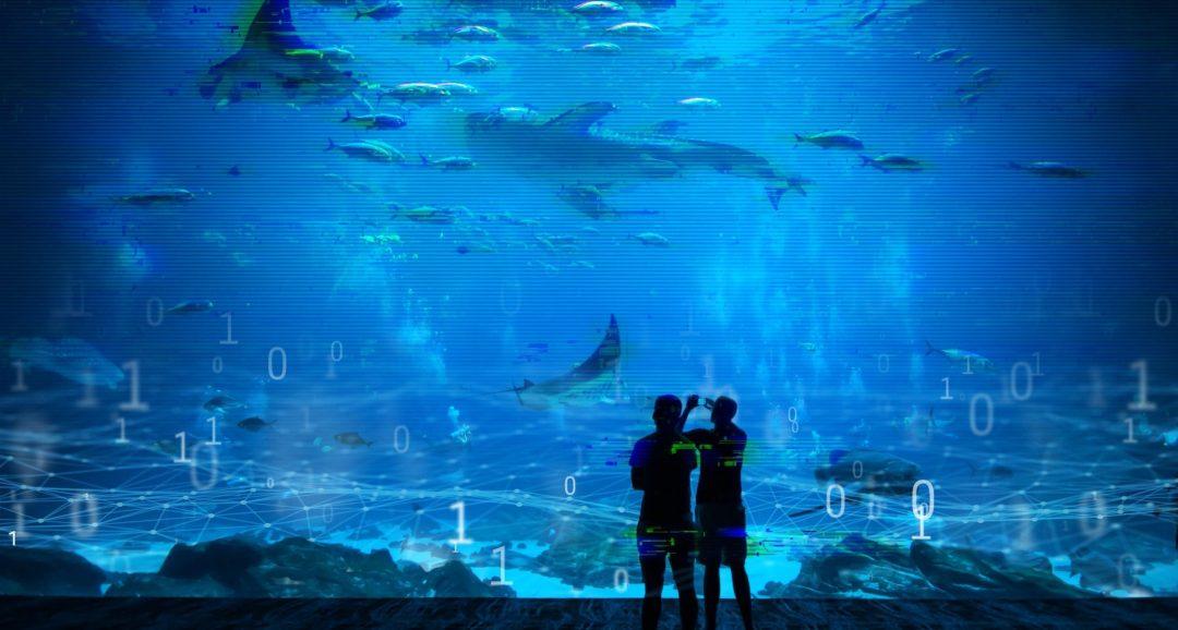 Shark tank? It's a cyberattack