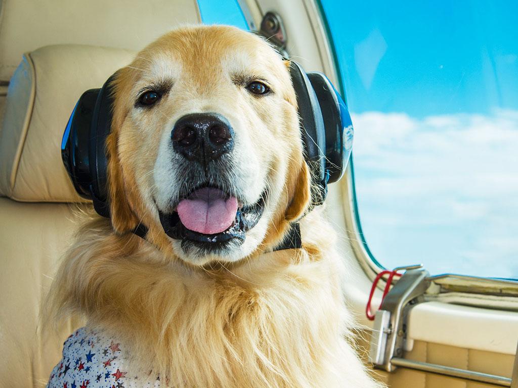 Transportar animal de estimação no avião