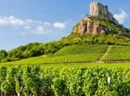 Mieux connaitre le vignoble de Bourgogne