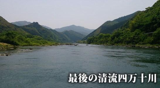 196km 四万十川 四万十 ひのき ヒノキ 檜 桧